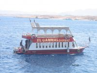 Dalış Cenneti Sharm el Sheikh